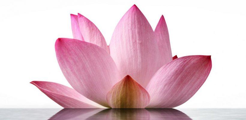Prema Yoga Live-Übertragung